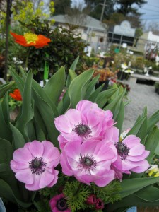 anemones in mixed plantings